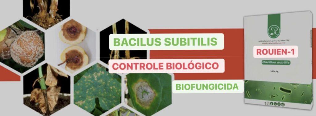 Bacilus Subtilis Rouien